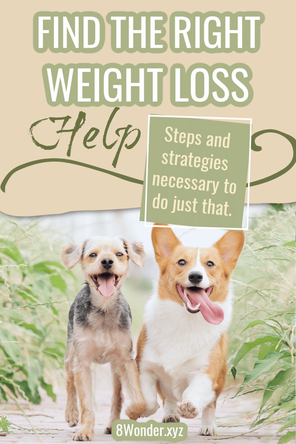 Weight Loss Help You Can Use